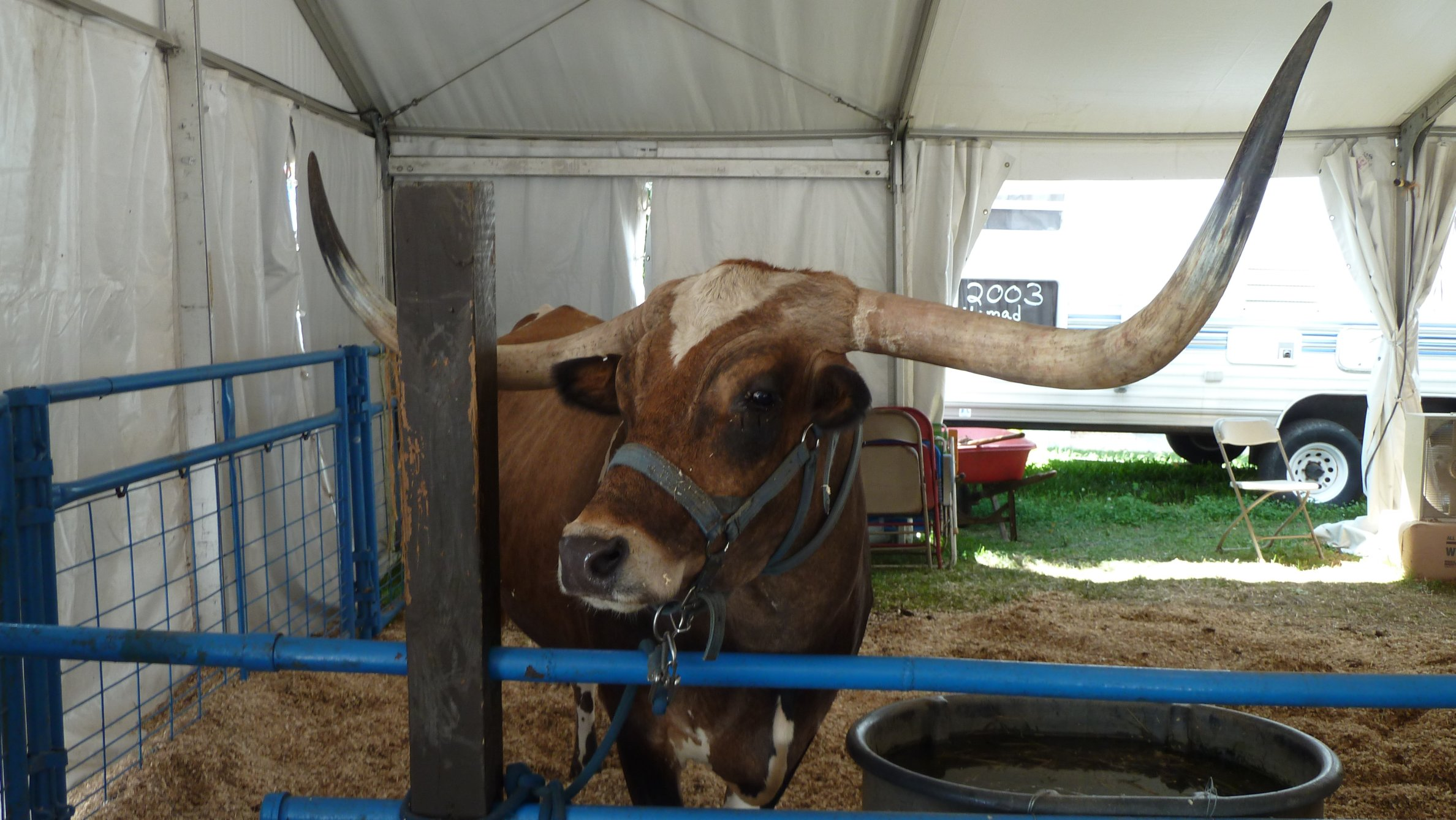 New_Jersey_State_Fair_0013