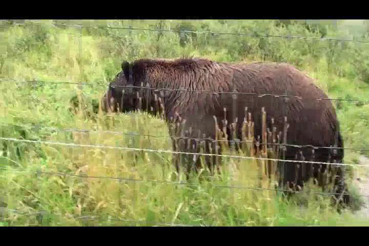 Anchorage Wildlife Center